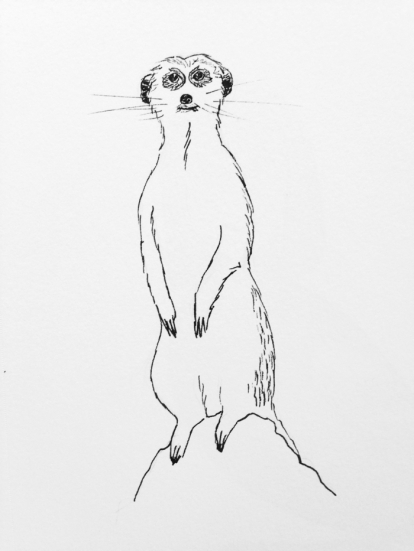 meerkat drawing