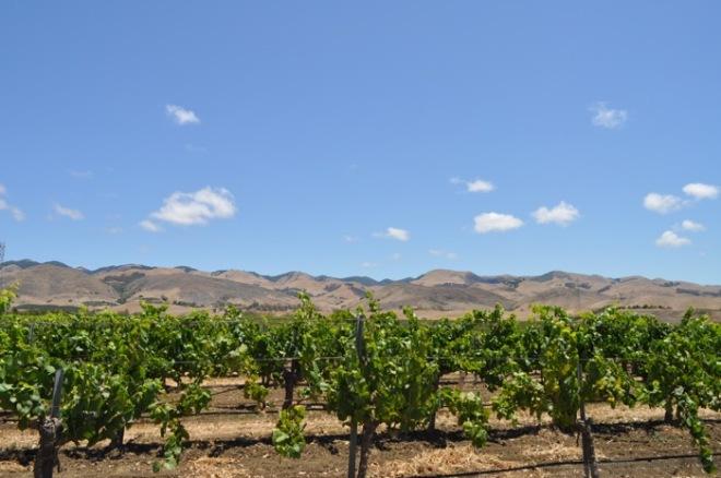 baileyana winery