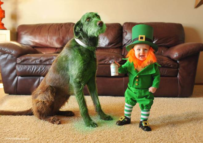 Real-life-leprechaun-dog