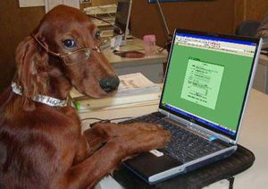 dogtyping2